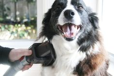 11 Cleaning Tips Every Dog Owner Should Know prettyfluffy.com