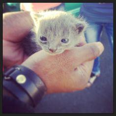 Petit chaton ❤
