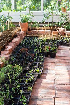 Takana, Garden, Plants, House, Garten, Haus, Gardens, Lawn And Garden, Houses