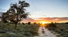 The Mabuasehube Wilderness Trail is a two-day route that starts in Botswana and ends in South Africa, with an overnight stop at Mosomane Pan. Africa Travel, Us Travel, 4x4 Tires, Holiday Competitions, Wilderness Trail, Self Driving, African Safari, South Africa, Country Roads