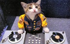 DJ Snoop Kitty... More Funny Cat Pictures at: http://MoronsAreEverywhere.Com
