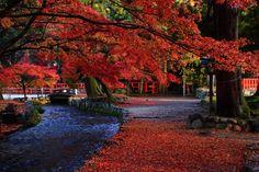見ごろの紅葉につつまれた京都上賀茂神社のならの小川