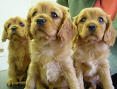 5 Essential Items for New Dogs That Might Not Be on Your List Online Pet Supplies, Dog Supplies, Cute Puppies, Dogs And Puppies, Rottweiler Mix, Dangerous Dogs, Pet Dogs, Pets, Brussels Griffon