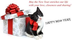cute cat and gift happy new year 2016 wish wallpaper new years 2016 happy new