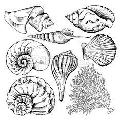 Vector Art : Shell set