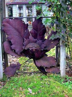 Awedome gate for garden
