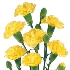 Order yellow mini carnations for weddings from flower wholesaler Bella Wedding Flowers. Available year round, fresh cut yellow mini carnation flowers are priced at wholesale prices to help you save.