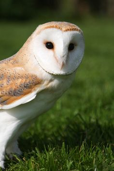 Owls Owls Owls-love, love, love
