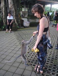 Feeding a monkey at the Sacred Monkey Foreset