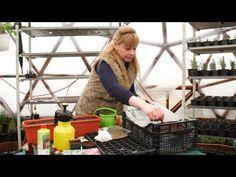 Producerea rasadurilor de legume - YouTube Planting Seeds, Gardening, Youtube, Plant, Garten, Seed Starting, Lawn And Garden, Youtubers, Yard Landscaping