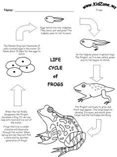 Download our free Life Cycle of a Frog Printout for your