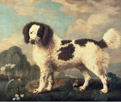 Brown and White Norfolk or Water Spaniel, 1778 Stubbs George Painting Reproductions Skye Terrier, English Springer Spaniel, Clydesdale, Yorkshire Terrier, Google Art Project, Spaniel Dog, Spaniels, Vintage Dog, Nature