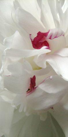 * white flowers