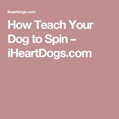How Teach Your Dog to Spin – iHeartDogs.com