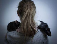 ... rats ...