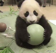 Sassy panda!