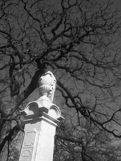 Graveyard Collection Graveyard Beauty graveyard black and white photography