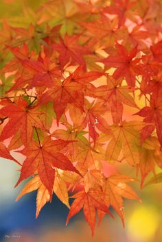 growing of autumn | Flickr - Photo Sharing!
