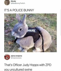Top Funny Memes About Disney & Disney Memes Zootopia Funny Animal Jokes, Cute Funny Animals, Funny Cute, Cute Dogs, Top Funny, Cute Animal Pictures, Funny Pictures, Funny Pics, Funny Captions