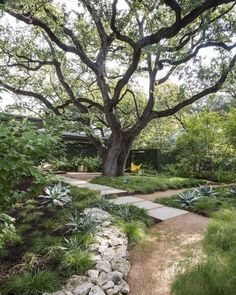 Awesome Modern Front Yard Design and Landscaping Ideas 29 Tropical Landscaping, Landscaping With Rocks, Modern Landscaping, Front Yard Landscaping, Backyard Landscaping, Landscaping Ideas, Pavers Ideas, Trees For Front Yard, Modern Front Yard