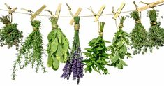 Liečivé rastliny sa používali na liečbu rôznych ochorení dávno pred nástupom moderných liekov. Mnohokrát dokonca s lepšími výsledkami.