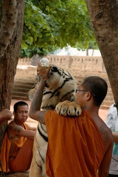 Monk with tiger