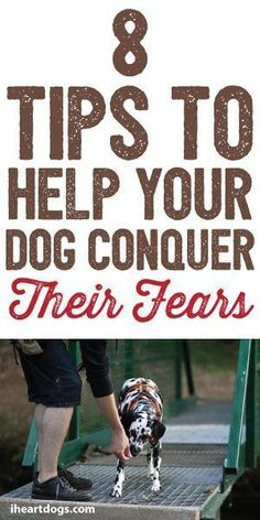 Dog Training Chewing 8 Tips To Help Your Dog Conquer Their Fears.Dog Training Chewing 8 Tips To Help Your Dog Conquer Their Fears Basic Dog Training, Puppy Training Tips, Potty Training, Training Dogs, Training Classes, Leash Training, Training Schedule, Therapy Dog Training, Crate Training
