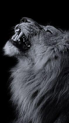 Lion Iphone Wallpapers on WallpaperPlay lion vs bull elephant crocodile vs elephant lion attacks animal fight back nature wildlife Iphone Wallpapers, Lion Wallpaper Iphone, Elephant Wallpaper, Animal Wallpaper, Wallpaper Backgrounds, Iphone Backgrounds, Desktop Pics, Lion Images, Lion Pictures