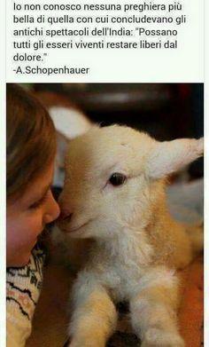 Noi che amiamo gli animali più delle persone