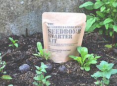 seedbombs - Pesquisa Google