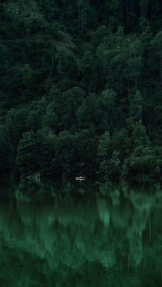 expressions-of-nature - Posts tagged forest Dark Green Aesthetic, Nature Aesthetic, Fishing Photography, Nature Photography, Portrait Photography, Children Photography, Nature Verte, Beste Iphone Wallpaper, Hidden Photos