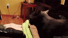 14 of the Most Overly Dramatic Cats Ever