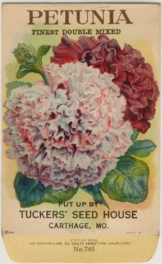 vintage seed packets | Vintage Flower Seed Packet Tuckers Seed House Lithograph PETUNIA ...