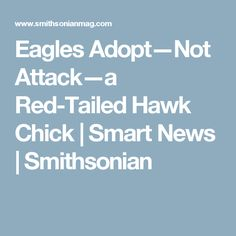 Eagles Adopt—Not Attack—a Red-Tailed Hawk Chick      |     Smart News | Smithsonian