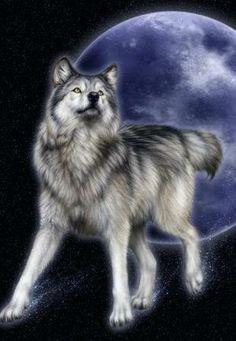 wilk nocą