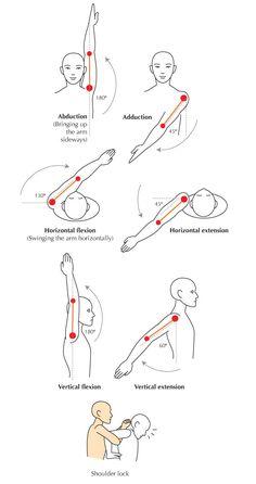 Shoulder Range Of Motion Chart The shoulder