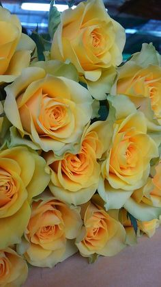 Roses in yellow & white shadows... @rt&misi@.