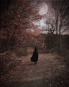 A Halloween stroll down an moonlight path.