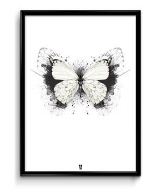 butterfly poster cool