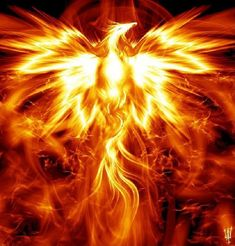 The Mythical Phoenix ~Symbolizing rebirth, the myth tells of a beautiful bird that lives up to years. When a Phoenix reaches the end of it's life, it builds a nest out of frankincense and myrrh that is set ablaze. The Phoenix willfully enters and cr Phoenix Artwork, Phoenix Images, Phoenix Quotes, Phoenix Wallpaper, Phoenix Rising, Dark Phoenix, Animal Spirit Guides, Spirit Animal, Fantasy Creatures