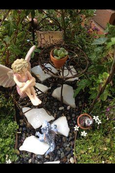 Miniature fairy garden real sedum succulent plants in terra