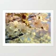 It Is Spring Again Art Print by Ally Coxon - $20.00
