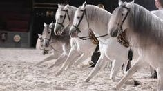 medieval horses - Google Search