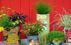 Les boîtes à café, thé, champagne, etc, peuvent faire de sublimes pots pour vos plantes. ©gardenloversclub.com