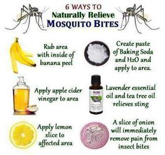 6 Ways to Naturally Relieve Mosquito Bites (from Dr. Josh Axe's facebook page)