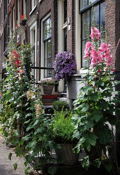 Street Gardening The Jordaan, Amsterdam, The Netherlands
