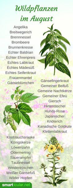 Auch im August kannst du in der Natur viel ernten! Entdecke mit diesen Tipps gesunde, nährstoffreiche Pflanzen, Kräuter und Früchte für Küche und Gesundheit