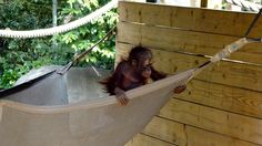 Baby Pelari makes our day! (Photo by Ella Brown)