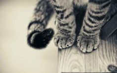 It's time we appreciated them for all of their delicious cuteness. | The 20 Cutest Pictures Of Cat's Paws