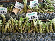 Wasabi Root - very rare in the UK! Chocolate Trifle, Luck Of The Irish, Mexican Food Recipes, Asparagus, Exotic, Spices, Herbs, Stock Photos, Dishes